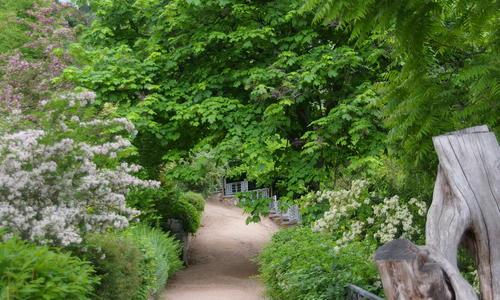 Самые быстрорастущие виды деревьев и кустарников для дачи. Фото