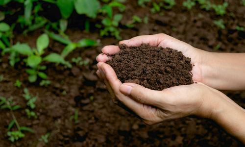 Почвенные бактерии, полезные для растений, и их функции