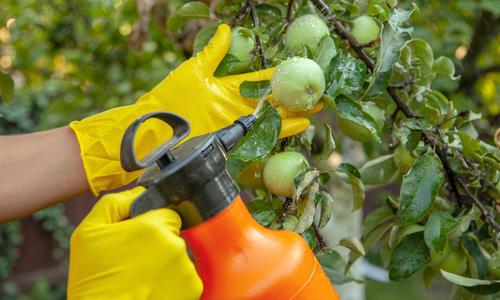 Надежные средства защиты плодовых деревьев от вредителей