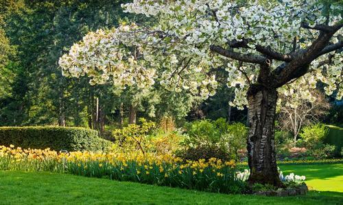 Что посадить под яблоней? Простые ландшафтные решения