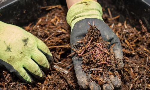 Как разводить земляных червей