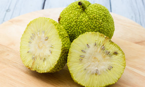 Адамово яблоко — рецепты приготовления настойки, применение, лечебные свойства
