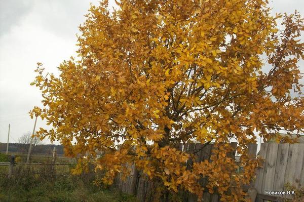Наша осень