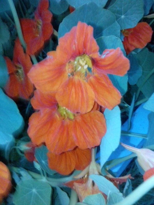 А у нас в коробе из-под холодидьника растут цветы