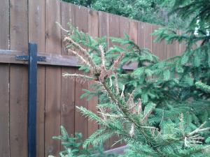 Поврежденные елки