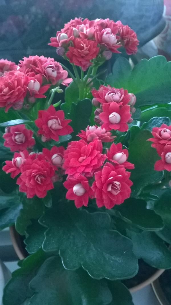 Этот цветок мне подарили. Хочу узнать название.