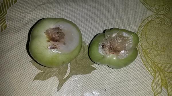 Сами помидоры