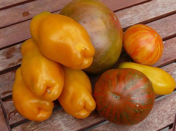 Это  помидоры. Те что желтенькие сорт называется Эрос.