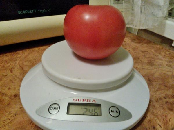 "томат ""Малиновый закат F1"""