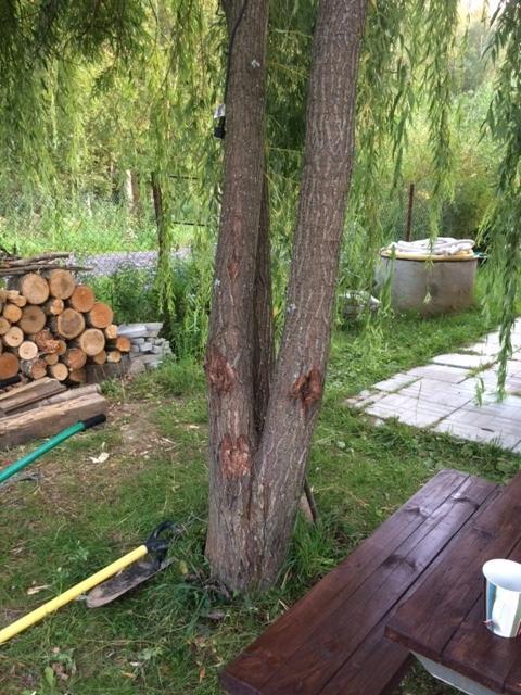 Общий вид дерева