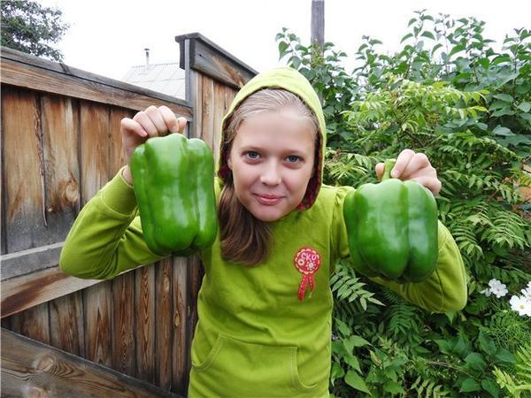 Племянница горда спелым сладким урожаем