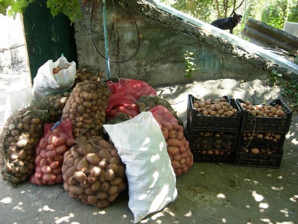 Я и картофель