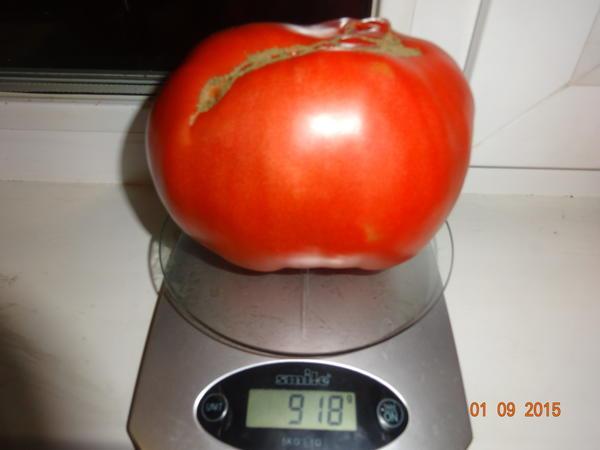 помидор  малиновый рай