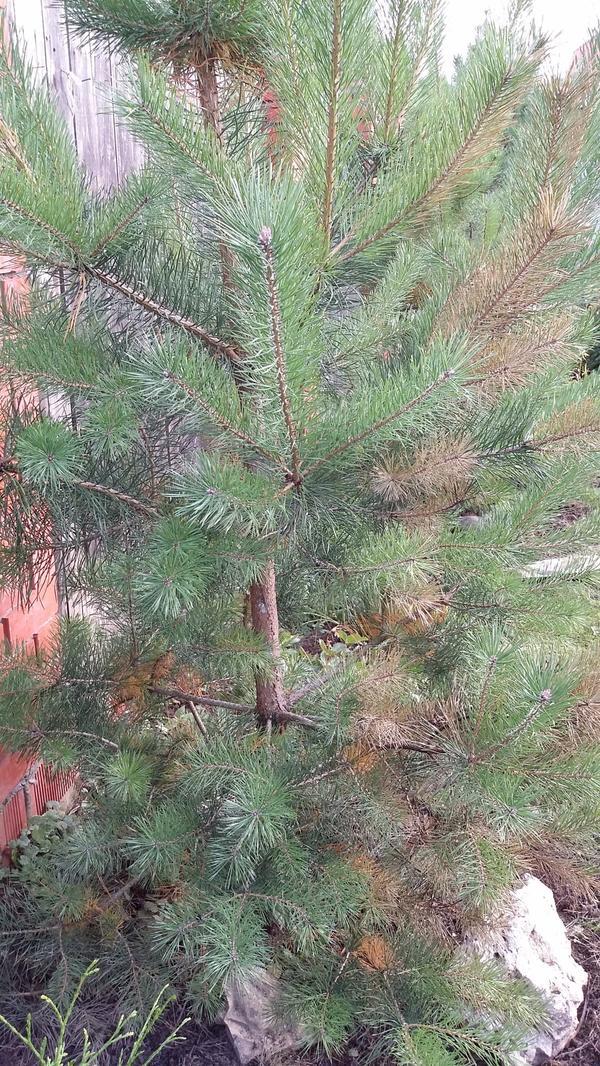 Это наше дерево.