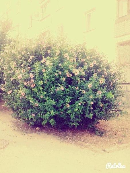 подскажите, как называются эти цветы