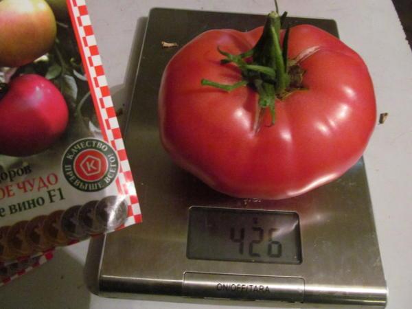помидор 426 г.