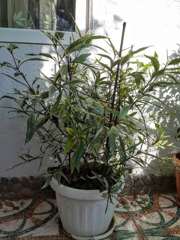 Неизвестное растение из Индонезии