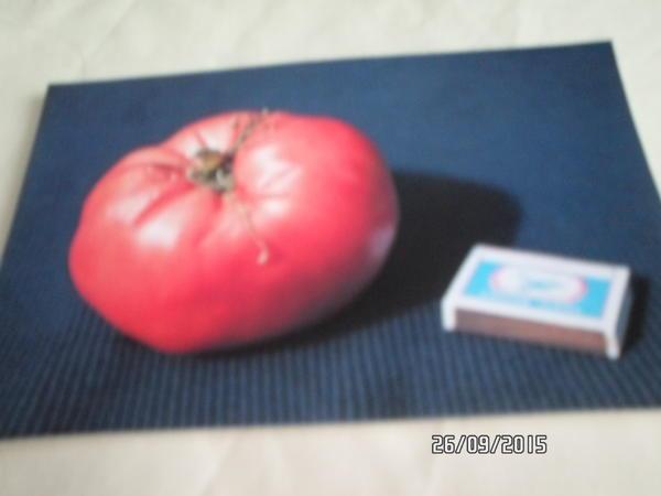 """помидор """"Малиновое чудо"""""""