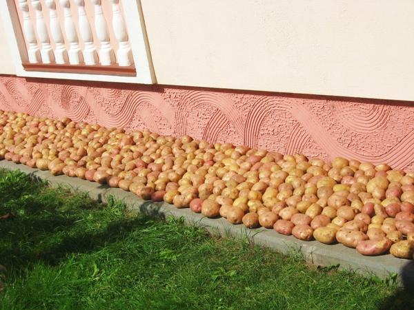 Курица с картошкой и цветной капустой в духовке