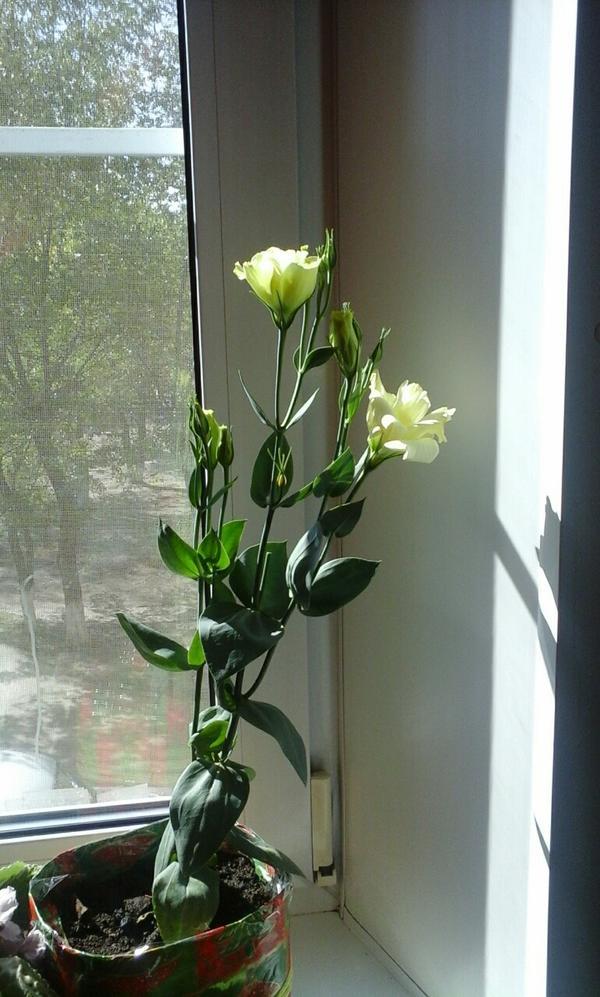 Неизвестный цветок