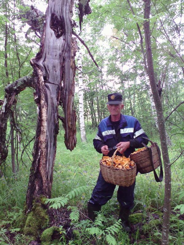 мой отец с полными корзинами грибов