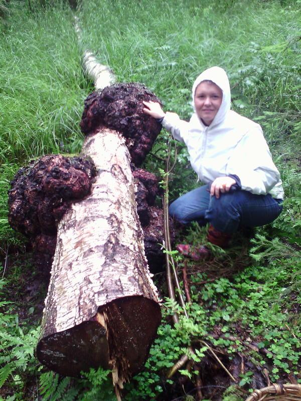 гигантский кам случайно найденный в лесу
