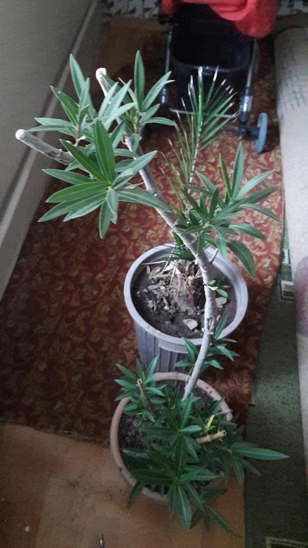 Неизвестное растение.