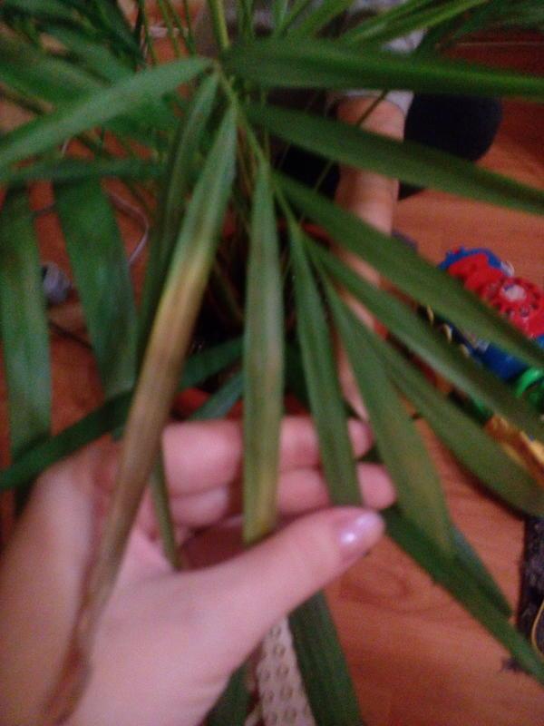 Вот так листья сохнут