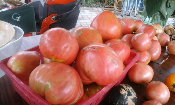 помидоры выращенные под сеном