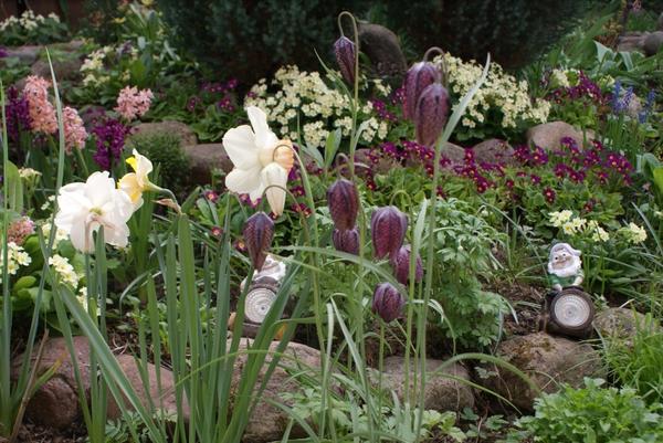 Весенний цветок 6 букв