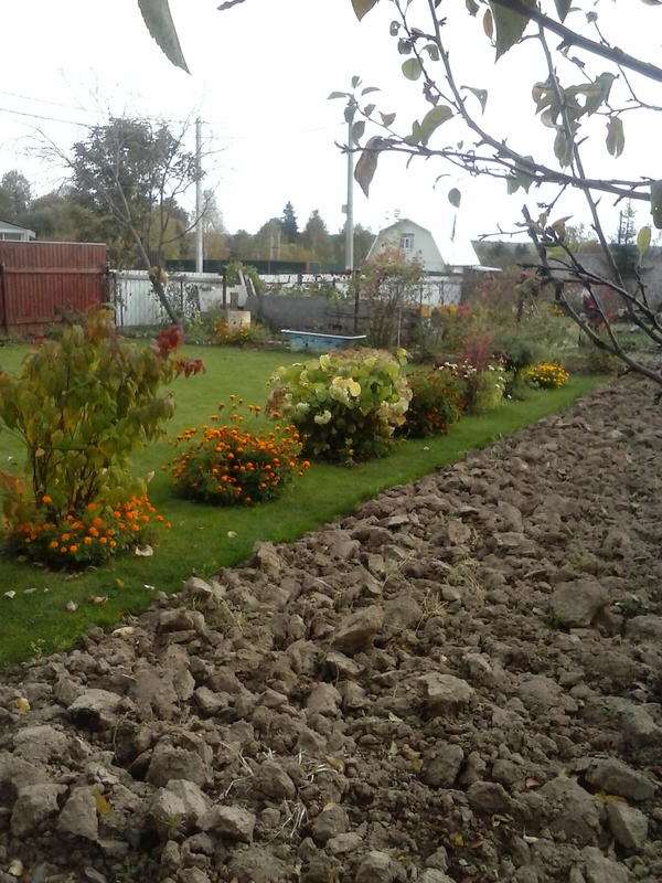 газон, плавно переходящий в огород