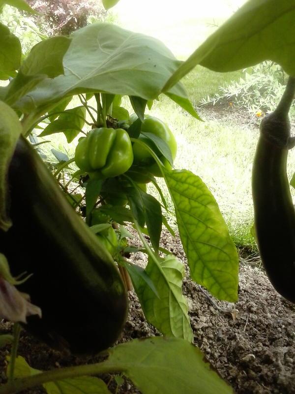 частичка урожая