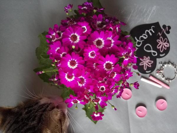 Здравствуйте,подскажите пожалуйста что за цветок,название и как ухаживать?