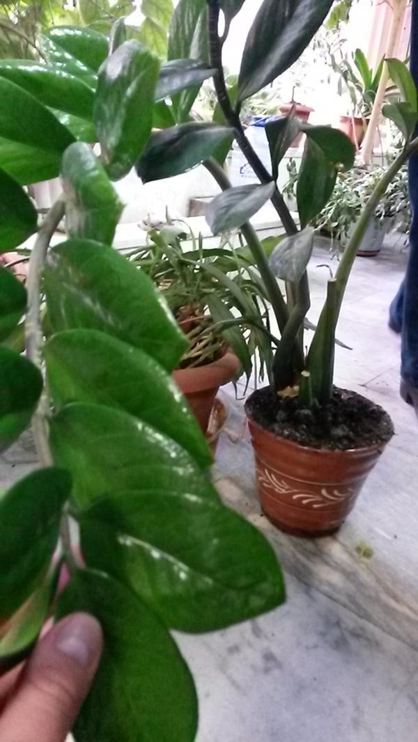 Помогите пожалуйста узнать название растения)))