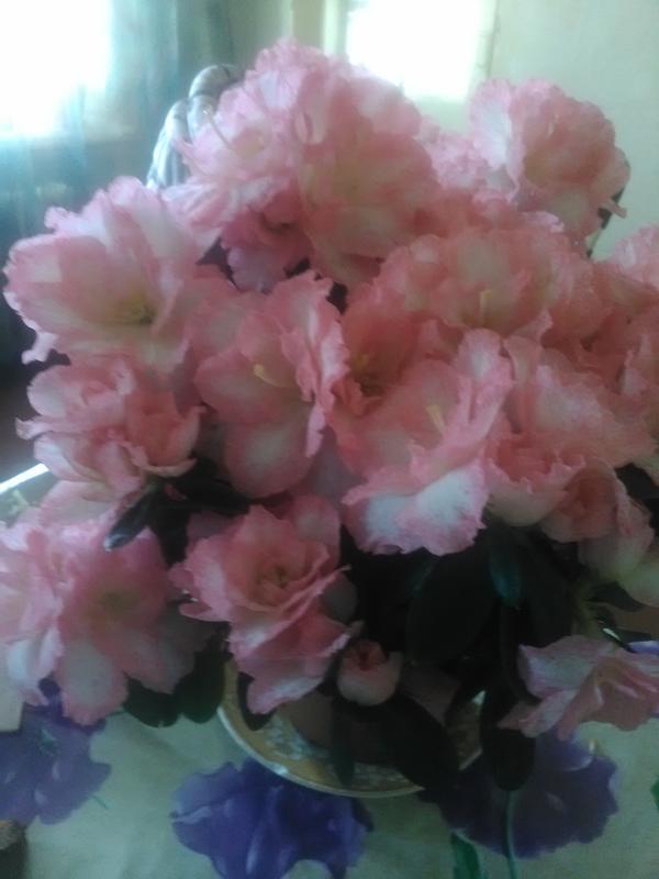 Что за цветок?