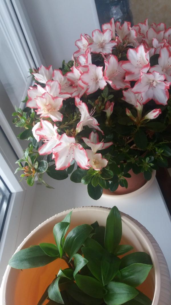 Растение не знаю название