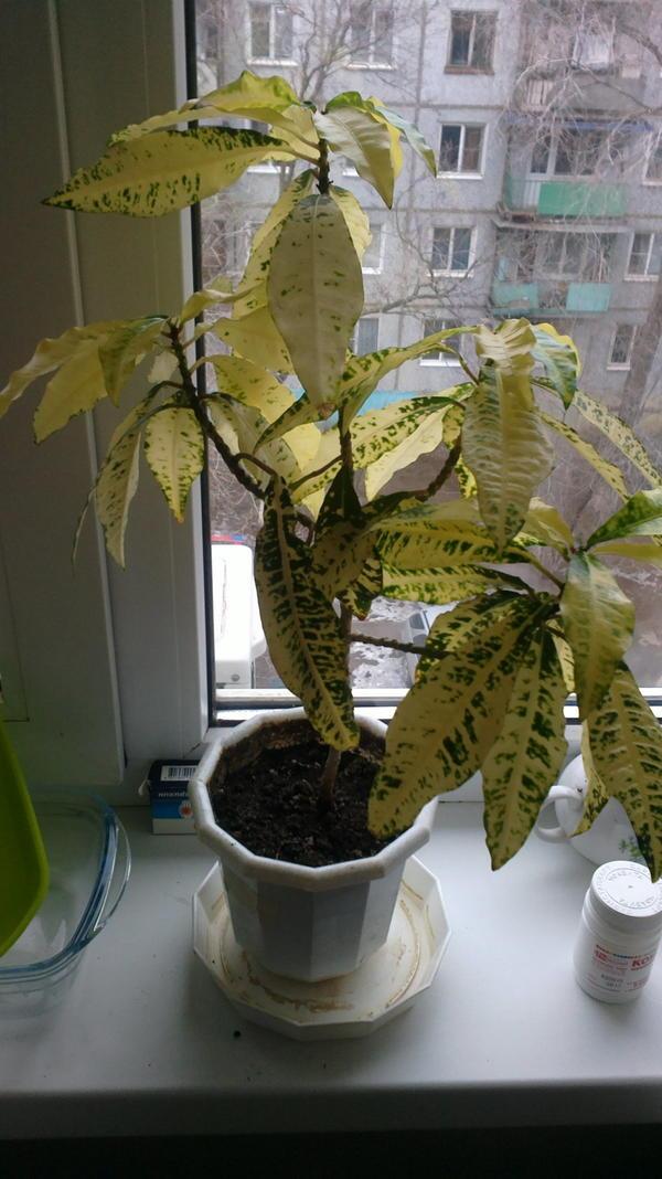 растение знать бы какое