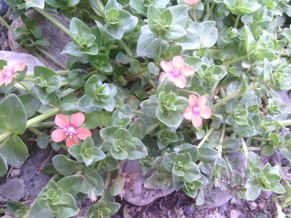 Как называются эти милые цветочки?