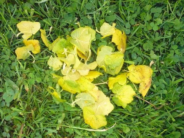 именно небольшие листочки желтеют