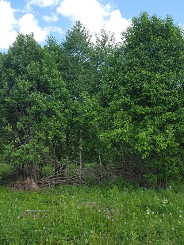 Вот такие выросли деревья