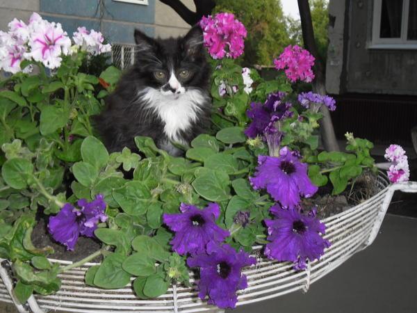 Мышича сняли с убитой мамки (тоже кому-то мешала) сейчас вырос в шикарного кота