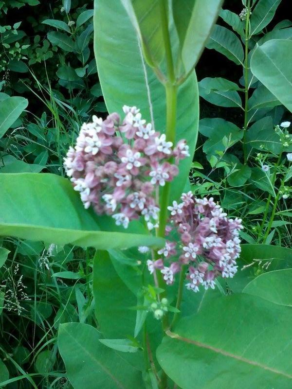 Неизвестный цветок на поляне