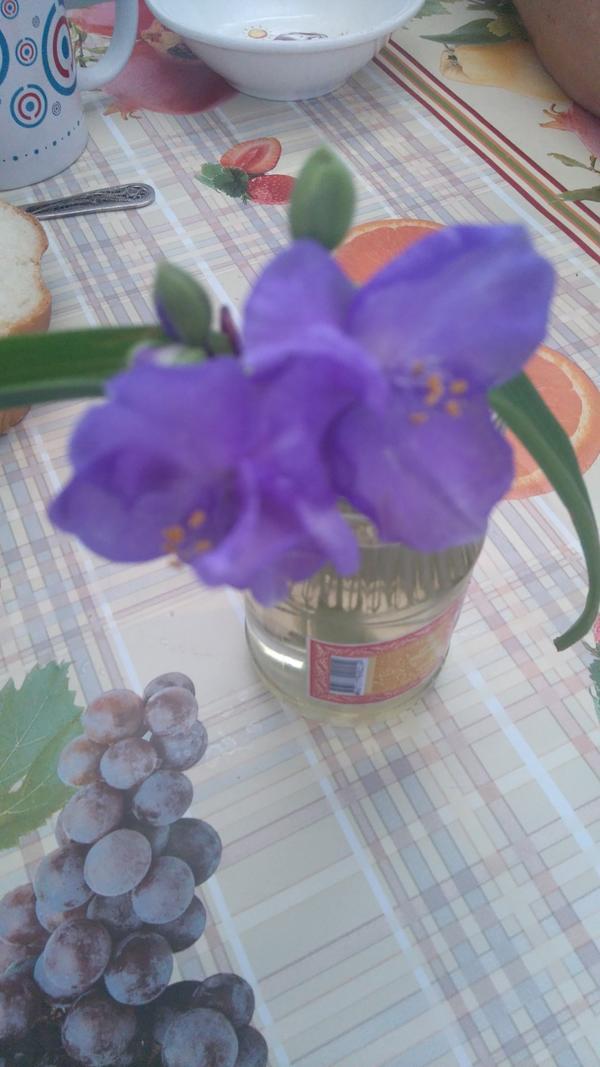 Подскажите пожалуйста название цветка