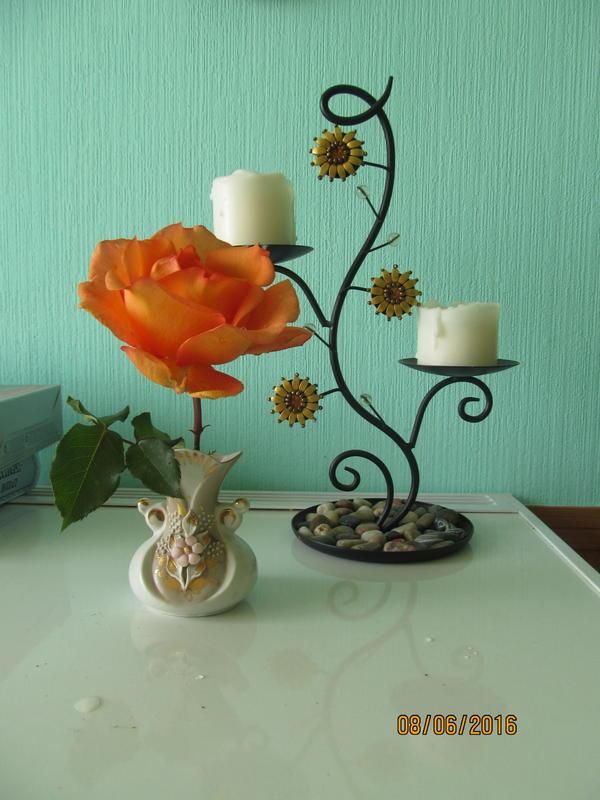 первая роза этого года