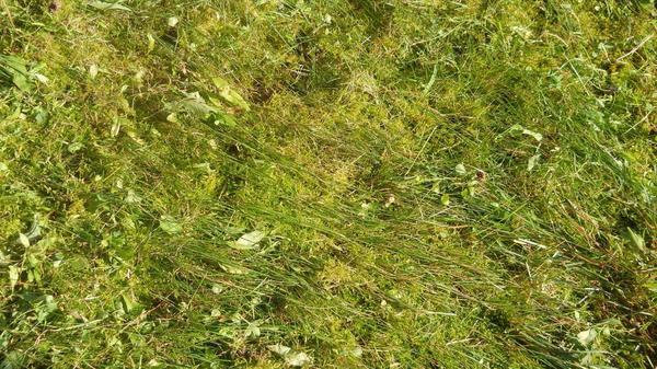 мох на земле
