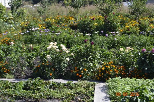 Общий вид огорода,