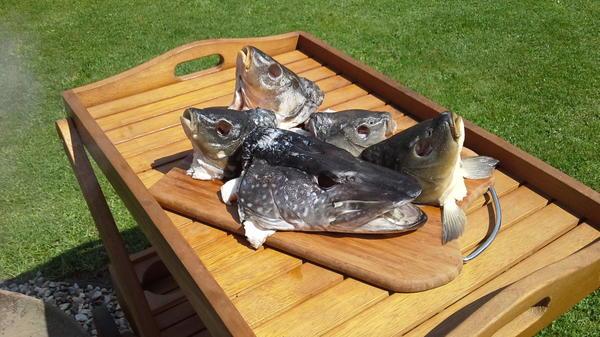Головы рыбы