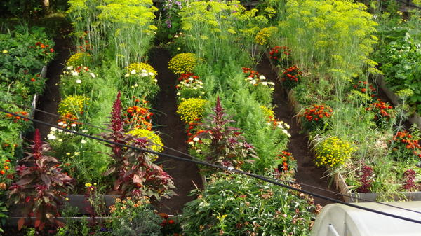 Мой огород летом.