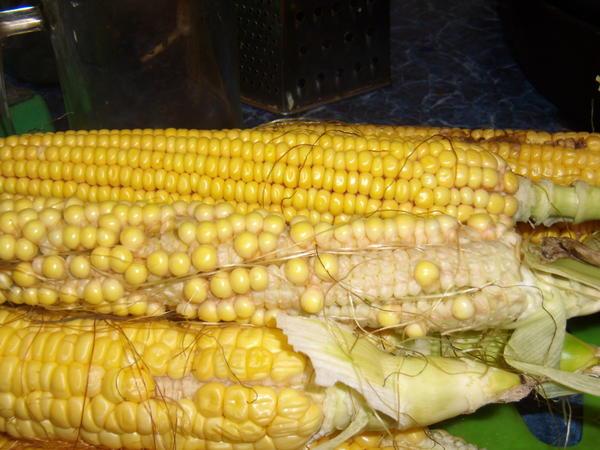 кукуруза хорошая и проблемная