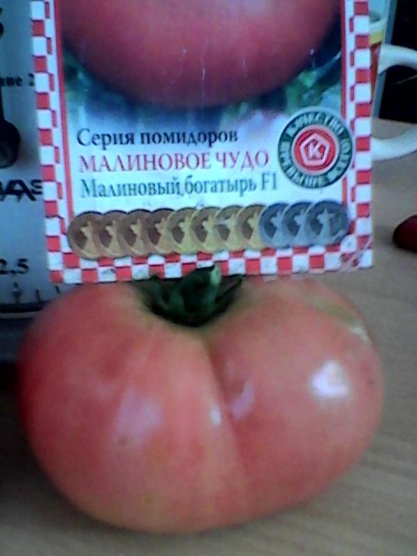 помидор семена  нпо россии малиновый Багатырь